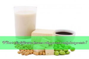 different between whey protein and plant protein